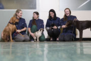 The Pet Surgeons Sheila Brennan with Laila the dog Sophia Mackey with Izzy the pug Gemma O Donoghue with Jessie the cat and Lassara McCartan with Heidi the dog
