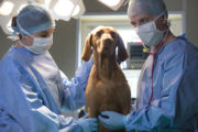 The Pet Surgeons Sophia Mackey with Laila the dog and Shane Guerin