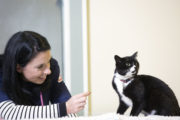 The Pet Surgeons Vet Gemma O Donoghue with her cat Jessie